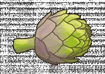 Bio Artyčok, Cynara scolymus, v květináči-2526