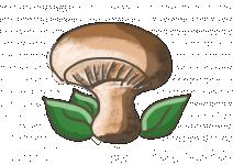 Bio Houbová bylinka, Rungia klossii, v květináči-2558