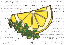 Bio Mateřídouška citronová, Thymus citriodorus, v květináči-2579