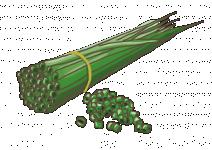 Bio Pažitka pobřežní, Allium schoenoprasum, v květináči-2516