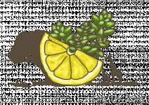 Bio Saturejka africká citronová, Satureja biflora, v květináči-2567