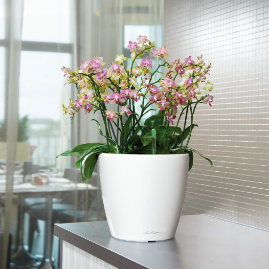 Samozavlažovací květináč Lechuza CLASSICO LS 21, komplet set, bílý-2841