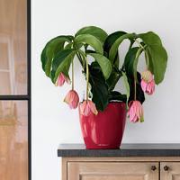 Samozavlažovací květináč Lechuza CLASSICO LS 21, komplet set, červený-2754