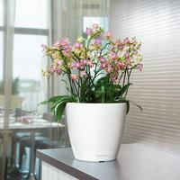 Samozavlažovací květináč Lechuza CLASSICO LS 35, komplet set, červený-2773