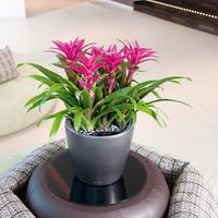 Samozavlažovací květináč Lechuza CLASSICO LS 35, komplet set, stříbrný-2777