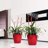 Samozavlažovací květináč Lechuza CLASSICO LS 43, komplet set, červený-2791