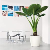 Samozavlažovací květináč Lechuza CLASSICO LS 50, komplet set, bílý-2805
