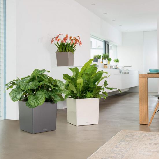 Samozavlažovací květináč Lechuza CUBE Premium 40, komplet set, bílý-2854