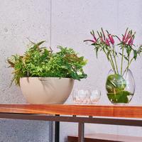 Samozavlažovací květináč Lechuza CUBETO Stone 30, komplet set, pískový-2665