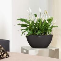 Samozavlažovací květináč Lechuza CUBETO Stone 40, komplet set, černý-2681