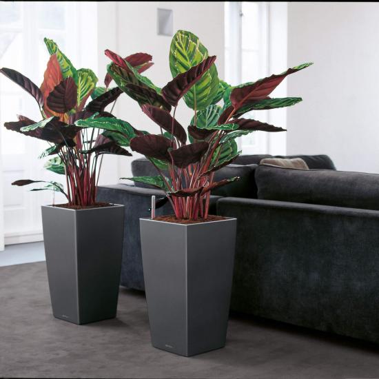 Samozavlažovací květináč Lechuza CUBICO 40, komplet set, černý-2883