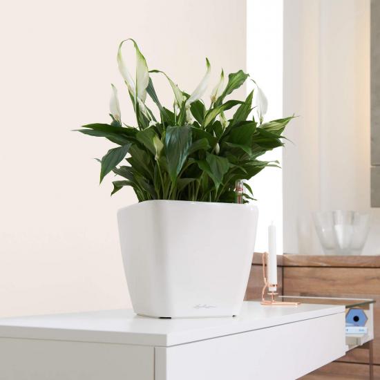 Samozavlažovací květináč Lechuza QUADRO LS 28, komplet set, bílý-3012