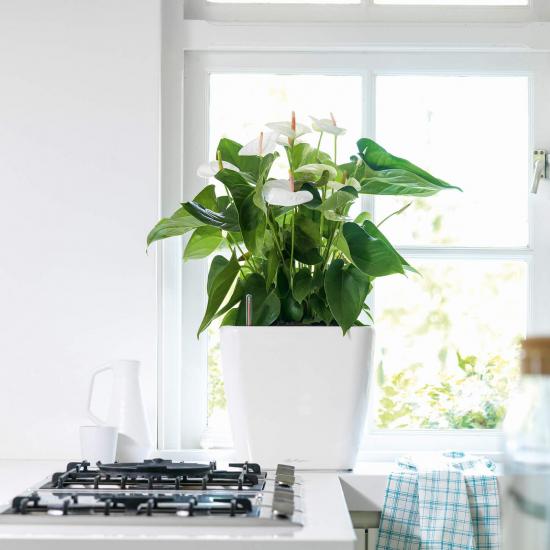 Samozavlažovací květináč Lechuza QUADRO LS 35, komplet set, bílý-3030