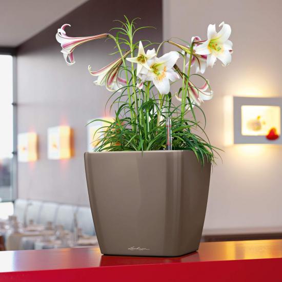 Samozavlažovací květináč Lechuza QUADRO LS 35, komplet set, taupe-3040