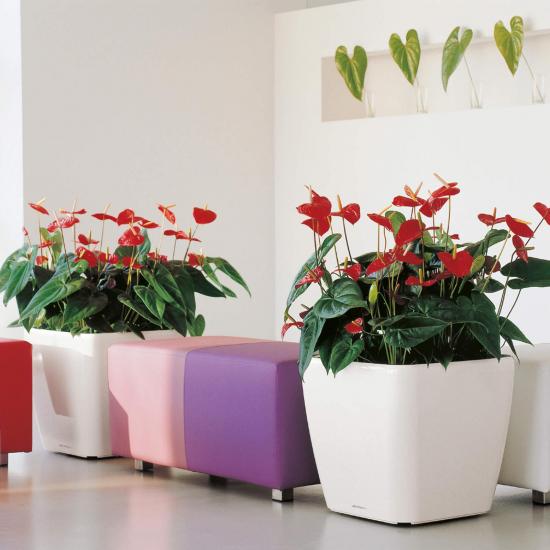 Samozavlažovací květináč Lechuza QUADRO LS 50, komplet set, bílý-3063