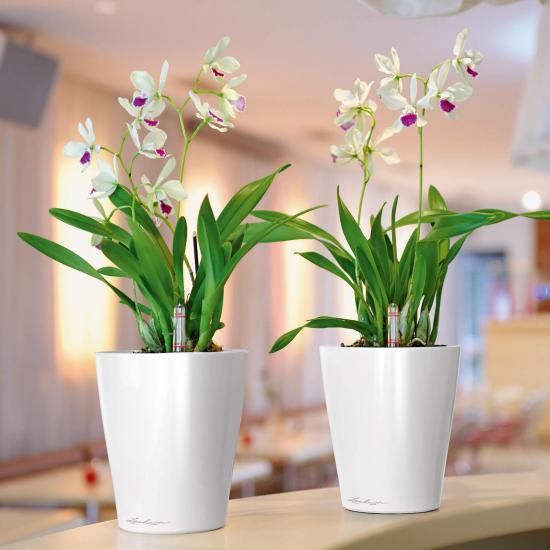 Samozavlažovací stolní květináč Lechuza DELTINI 14, komplet set, bílý-3092