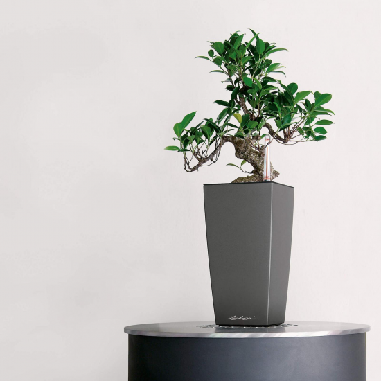 Samozavlažovací stolní květináč Lechuza MAXI CUBI 14, komplet set, antracitový-3112