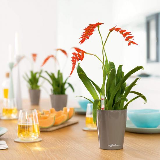 Samozavlažovací stolní květináč Lechuza MINI DELTINI 10, komplet set, taupe-3088