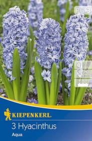 Hyacint cibule, Hyacinth Aqua, světle modrá, balená, 3 ks