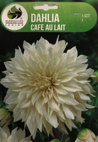 Jiřina cibule, Dahlia Café au lait, bílo - růžová, balená, 1 ks