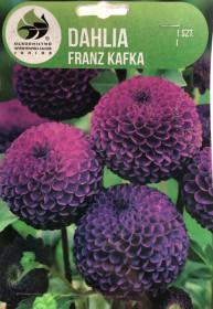 Jiřina cibule, Dahlia Franz Kafka, tmavě růžová, balená, 1 ks