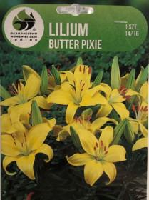 Lilie cibule, Lilium Asiatic Butter Pixie, žlutá, balená, 1 ks