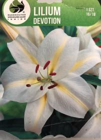 Lilie cibule, Lilium Oriental Devotion, bílo - žlutá, balená, 1 ks