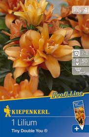 Lilie cibule, Lilium Tiny Double You, oranžová, balená, 1 ks