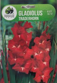 Mečík cibule, Gladiolus Tradehorn, červený, balený, 8 ks