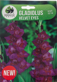 Mečík cibule, Gladiolus Velvet Eyes, fialovo - bordó, balený, 8 ks