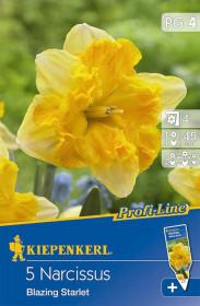 Narcis cibule, Narcissus Blazing Starlet, žlutá, balená, 5 ks