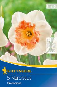 Narcis cibule, Narcissus Precocious, bílo - oranžová, balená, 5 ks