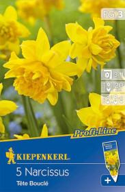 Narcis cibule, Narcissus Tete Boucle, žlutá, balená, 5 ks