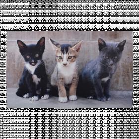 Rohožka s motivem koťat, Esschert Design, gumová, délka 75 cm