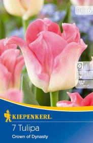 Tulipán cibule, Tulipa Crown of Dynasty, krémovo - růžová, balená, 7 ks