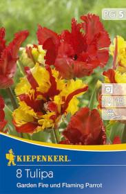Tulipán cibule, Tulipa Garden Fire a Flaming Parrot, mix barev, balená, 8 ks