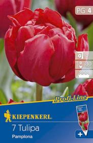 Tulipán cibule, Tulipa Pamplona, červená, balená, 7 ks