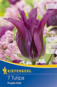 Tulipán cibule, Tulipa Purple Doll, fialová, balená, 7 ks