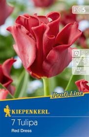 Tulipán cibule, Tulipa Red Dress, červená, balená, 7 ks