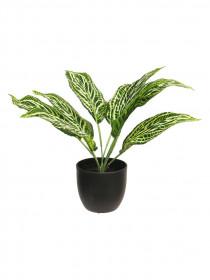 Umělá aglaonema Sunshine, v květináči, zelená, výška 30.5 cm