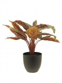 Umělá kalatea Sunshine, v květináči, zeleno - oranžová, výška 43 cm
