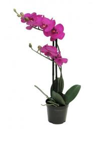Umělá orchidej Bora, v květináči, 2 výhony, fialová, výška 50 cm