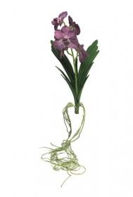 Umělá orchidej Vanda, s kořeny, fialová, výška 69 cm