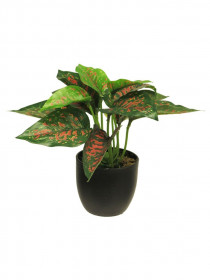 Umělý úžovník Sunshine, v květináči, zeleno - červený, výška 23 cm
